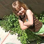 organic gardening photo